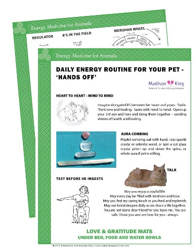 Energy Medicine for Animals - Hands Off Daily Energy Routine
