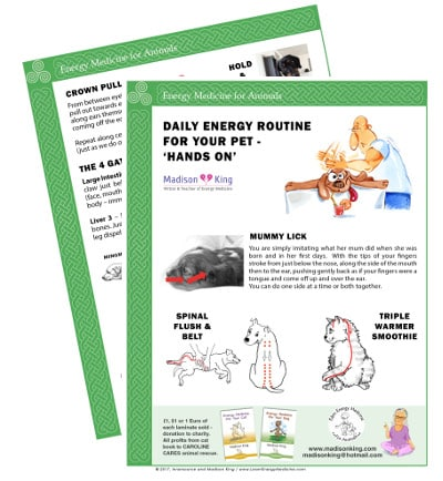 Hands On Daily Energy Routine for Animals